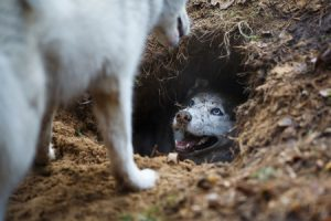 Dogs, Digging and Fences