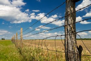A barbed wire farm fence.